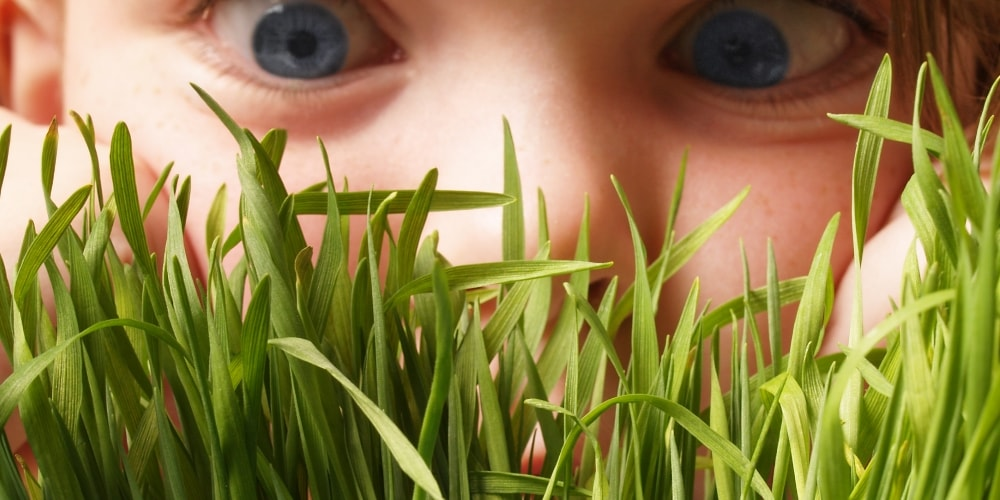 Sitecore 8.2 to be released, somebody taking a peek through the grass